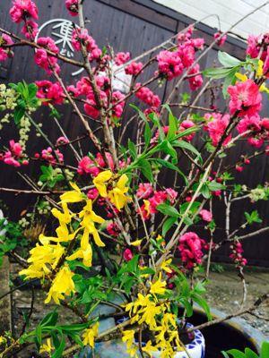 Spring Garden_e0251361_1456734.jpg