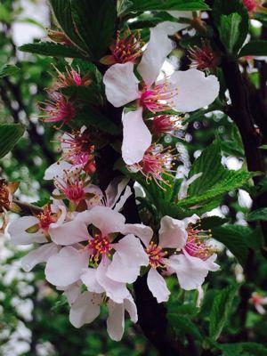 Spring Garden_e0251361_145694.jpg