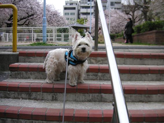 桜の景色でトントントン。_b0107163_243193.jpg