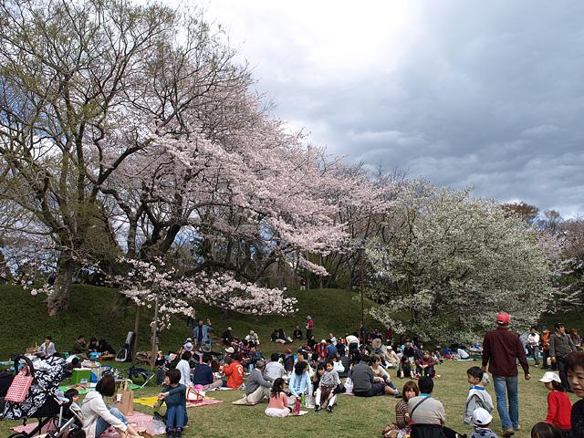 千葉の佐倉の桜:佐倉城址公園 (4/5)_b0006870_11134153.jpg