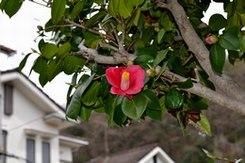 わが庭先の春一番は ・・・_b0102572_1030270.jpg