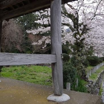 f0112576_2075032.jpg
