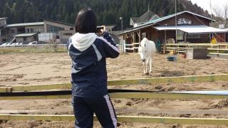 ゴージャスコームと、森の馬さん。_e0168583_9431952.jpg