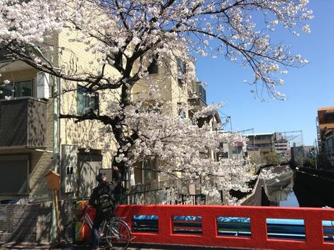 内川桜_a0112393_1213766.jpg