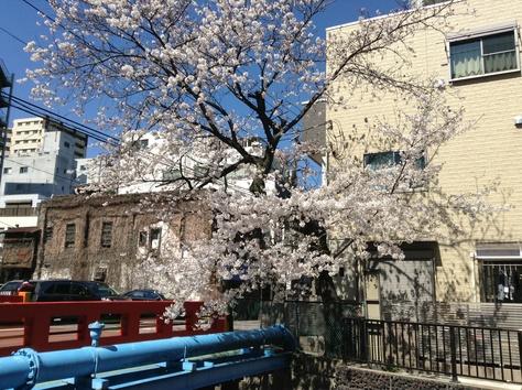 内川桜_a0112393_122433.jpg