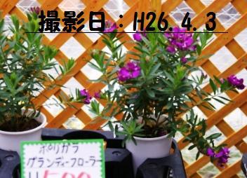 f0203094_16225128.jpg