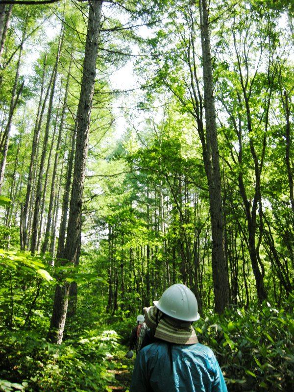 「きこりの森の会」ハイキング参加者募集_f0227395_1140171.jpg