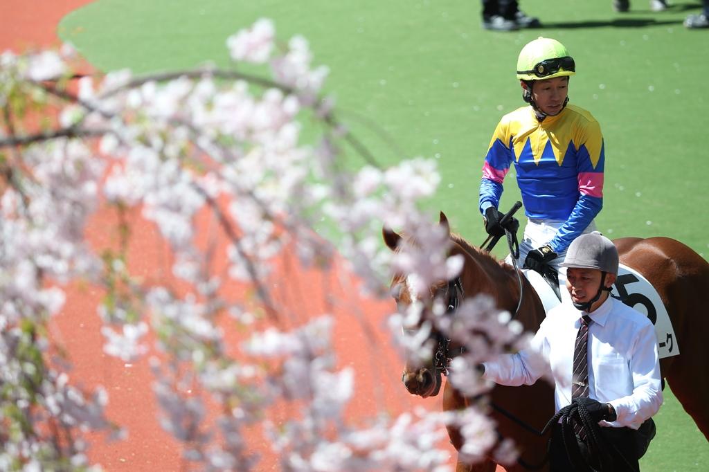 2014年4月6日 産経大阪杯(GⅡ)_f0204898_2350476.jpg
