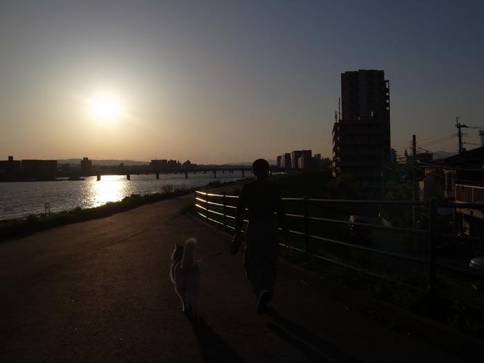 大淀川界隈(*^_^*)_c0049299_21231587.jpg