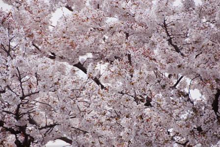 春_a0162301_813111.jpg