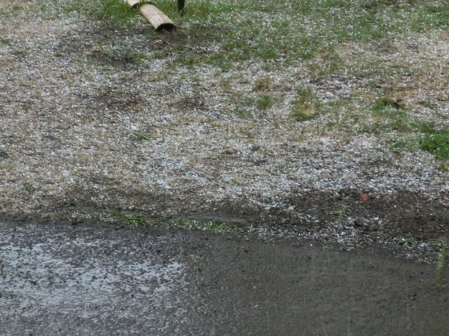 ヒョウが降ってきて寒かったが 駿河台3丁目のお花見会_f0141310_7545122.jpg