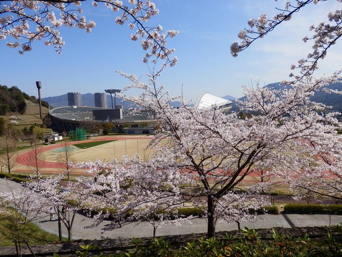 桜が咲いた・里歩き_f0219710_12322710.jpg