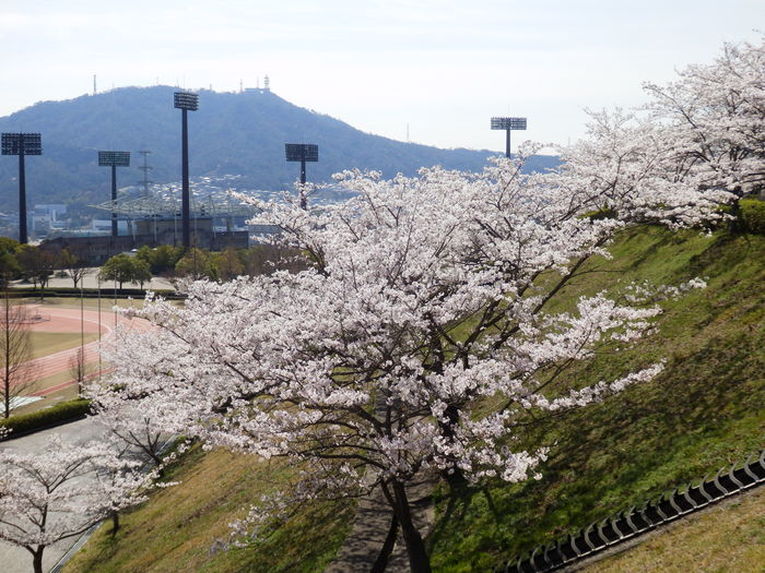 桜が咲いた・里歩き_f0219710_12344949.jpg