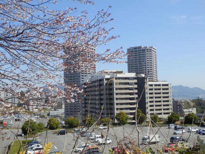 桜が咲いた・里歩き_f0219710_12351360.jpg