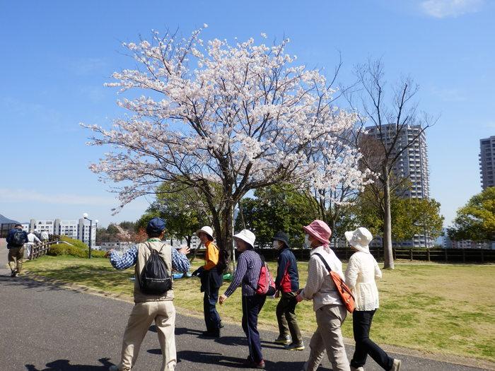 桜が咲いた・里歩き_f0219710_1238237.jpg