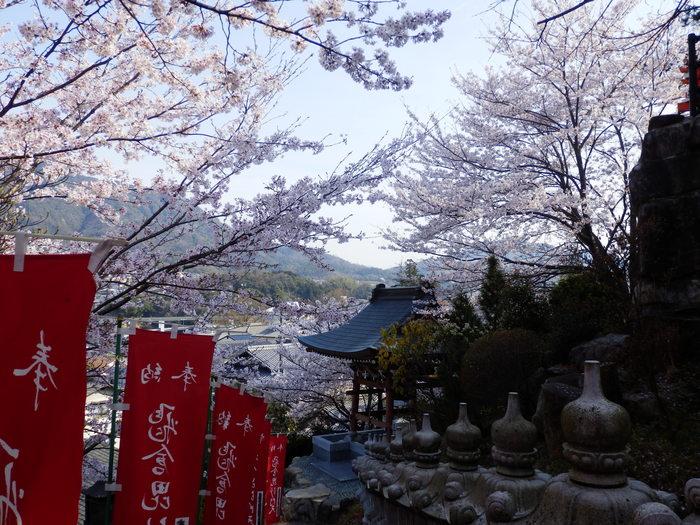 桜が咲いた・里歩き_f0219710_1243068.jpg