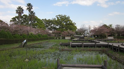 神野(こうの)公園  ~佐賀市~_b0228113_13421866.jpg