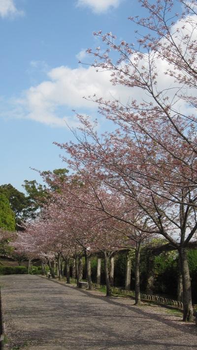神野(こうの)公園  ~佐賀市~_b0228113_13444289.jpg
