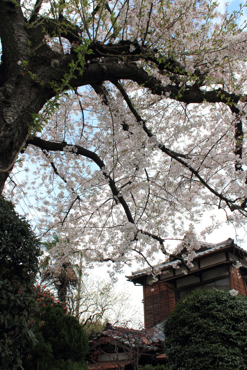 登戸  岸辺の春_b0061717_0232790.jpg