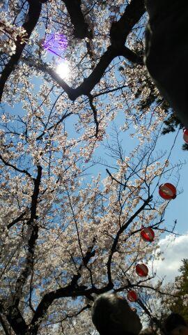 お花見_a0072623_11124990.jpg