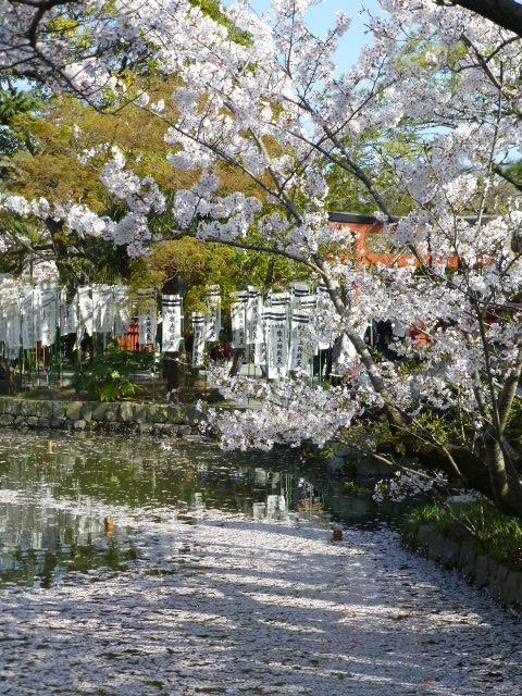 春の鎌倉散歩 桜編_e0237625_15492110.jpg