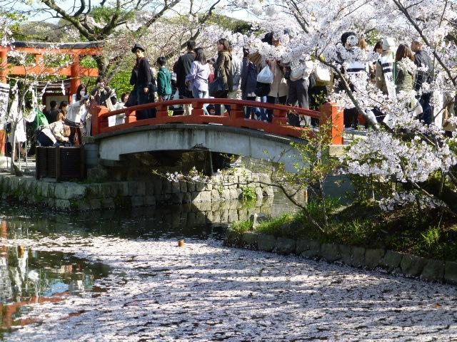 春の鎌倉散歩 桜編_e0237625_1553587.jpg