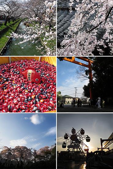 小江戸の春/2014_f0165332_21094206.jpg