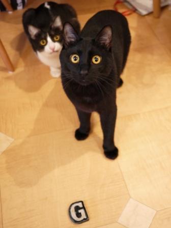 イニシャルG猫 ぎゃぉすみるきぃ編。_a0143140_19402086.jpg