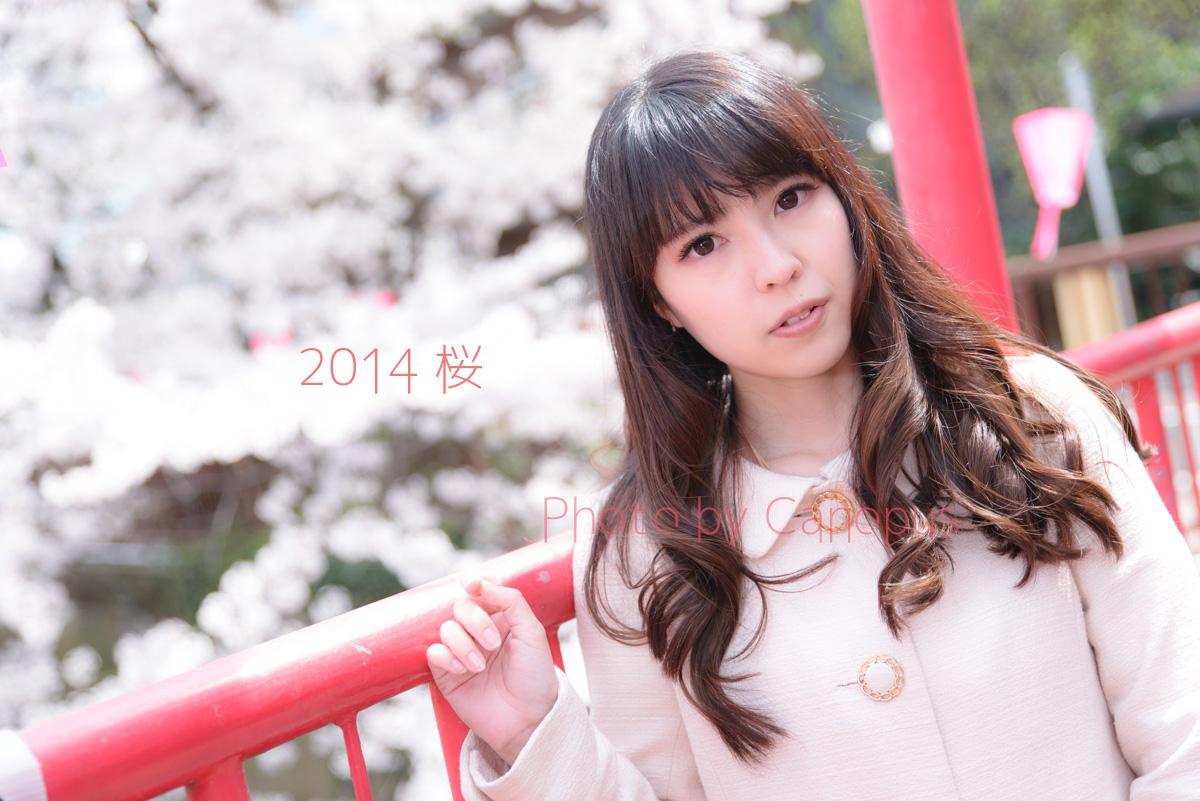 桜色の提灯と赤い橋_e0196140_1729080.jpg
