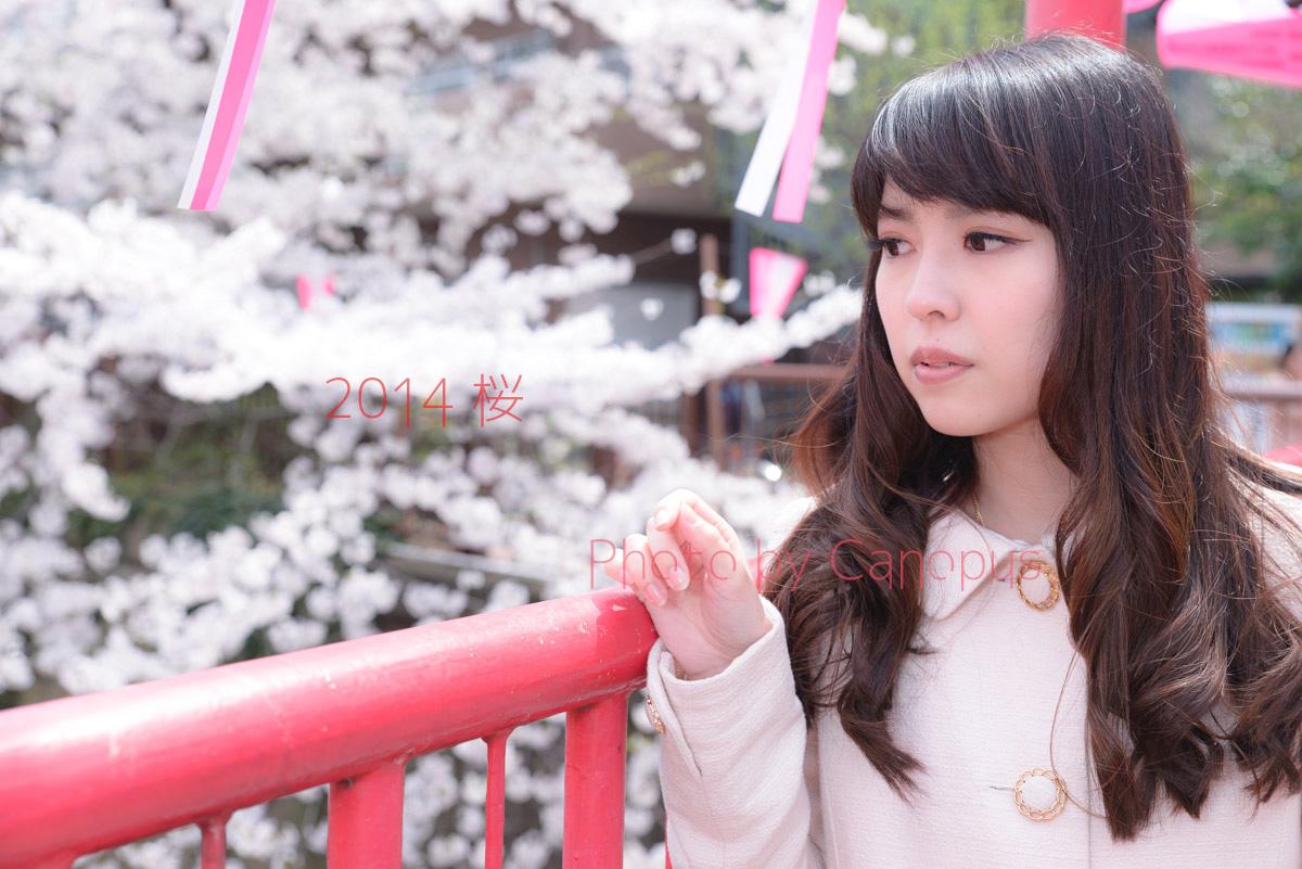 桜色の提灯と赤い橋_e0196140_17292079.jpg