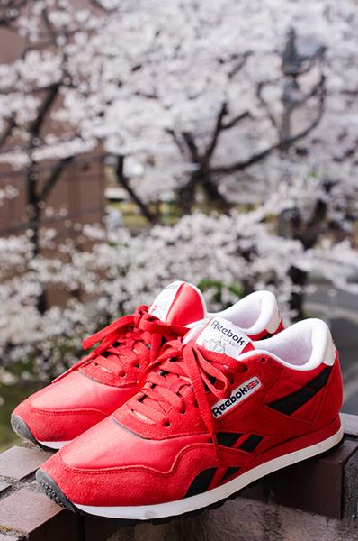 桜(アウトテイクから)_a0003650_11352915.jpg