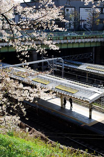 桜(アウトテイクから)_a0003650_11361128.jpg