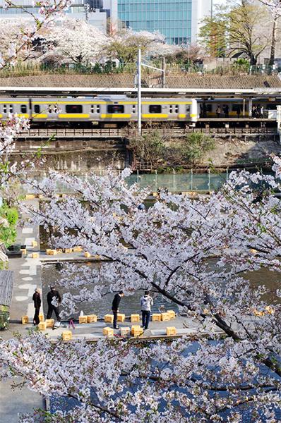 桜(アウトテイクから)_a0003650_11362878.jpg