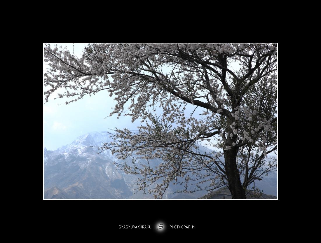 季節混在_c0253556_5482581.jpg