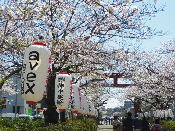お花見・・・鎌倉_f0158364_14435844.jpg