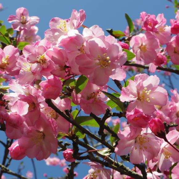 お花見・・・鎌倉_f0158364_14540372.jpg