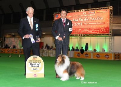 Asia Pasific section dog show 2014_f0126965_23445856.jpg