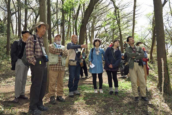 北鎌倉の里山にはヤマザクラが似合う:北鎌倉ウォッチング_c0014967_20252297.jpg