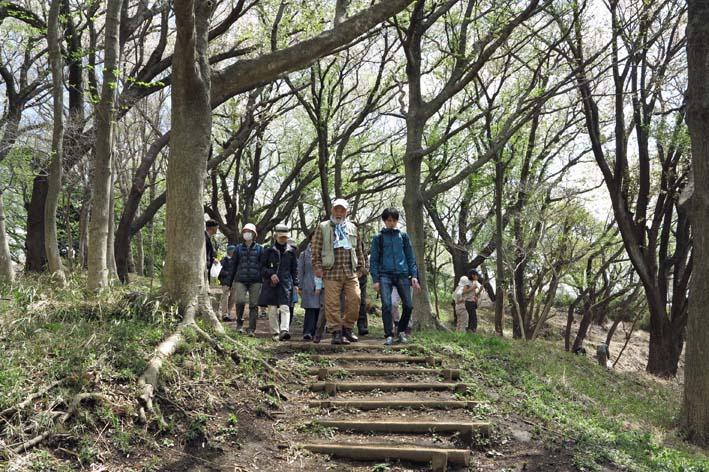 北鎌倉の里山にはヤマザクラが似合う:北鎌倉ウォッチング_c0014967_20315049.jpg