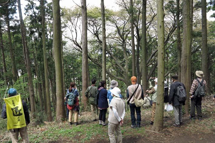 北鎌倉の里山にはヤマザクラが似合う:北鎌倉ウォッチング_c0014967_20321722.jpg
