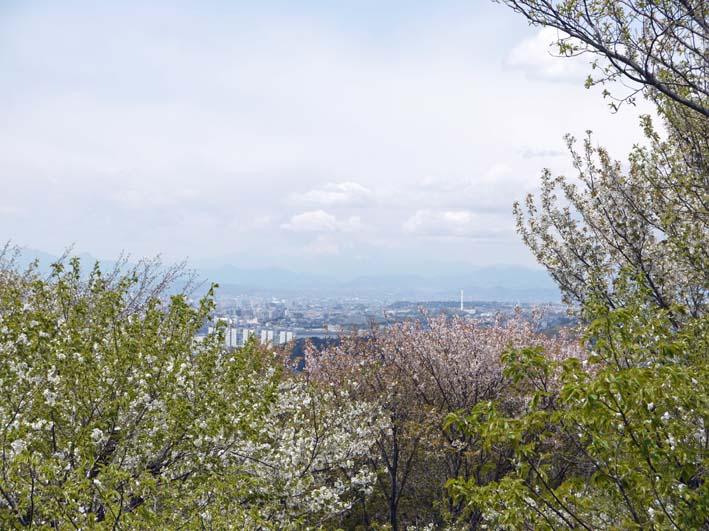 北鎌倉の里山にはヤマザクラが似合う:北鎌倉ウォッチング_c0014967_20345349.jpg