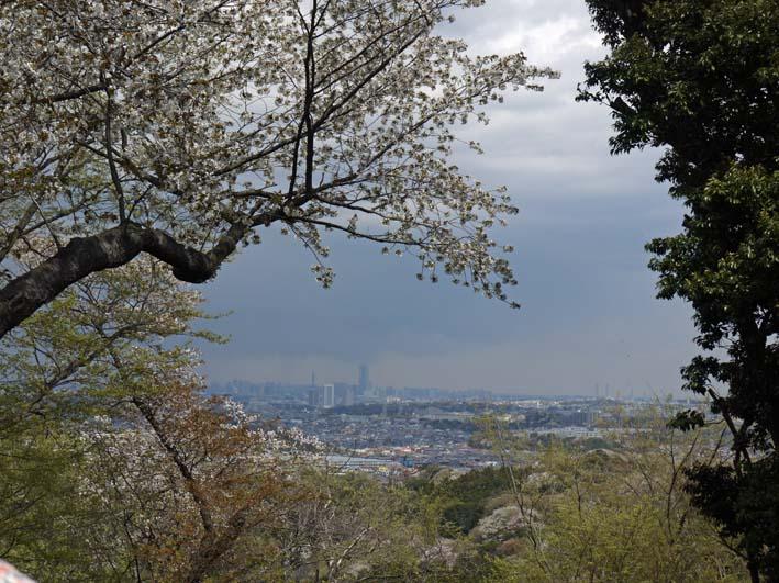 北鎌倉の里山にはヤマザクラが似合う:北鎌倉ウォッチング_c0014967_20351656.jpg