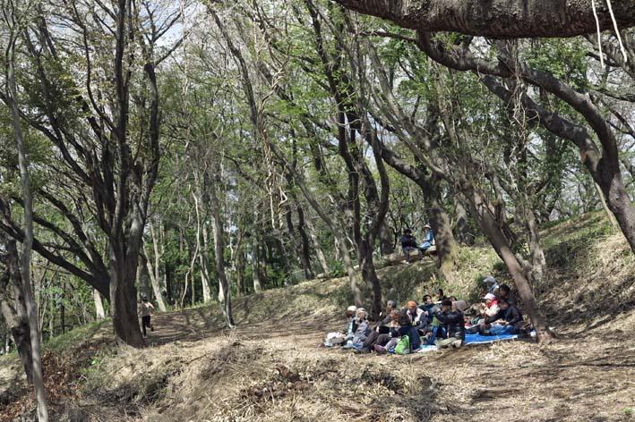 北鎌倉の里山にはヤマザクラが似合う:北鎌倉ウォッチング_c0014967_20393577.jpg