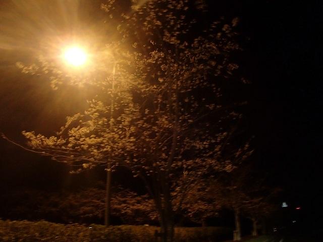 茨城県 到着    (眠い私と 釣りをする人 編 ①)_d0105967_11375624.jpg