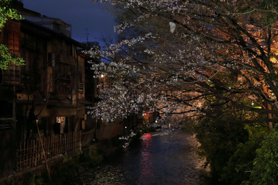 桜 2014 京都               _f0021869_0314984.jpg