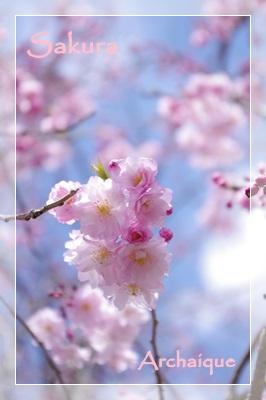 さくらの季節☆_c0220186_13335611.jpg