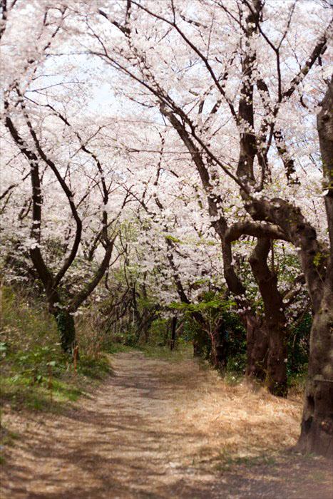 春たけなわ・・・_e0305388_13254584.jpg