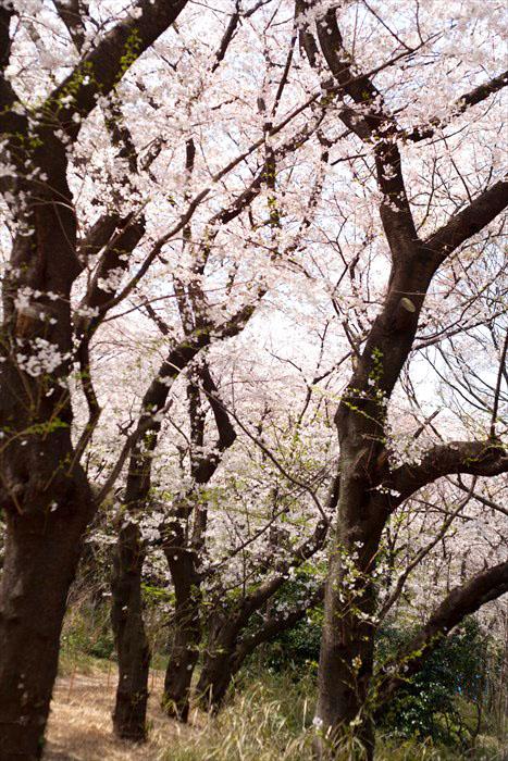 春たけなわ・・・_e0305388_1326101.jpg