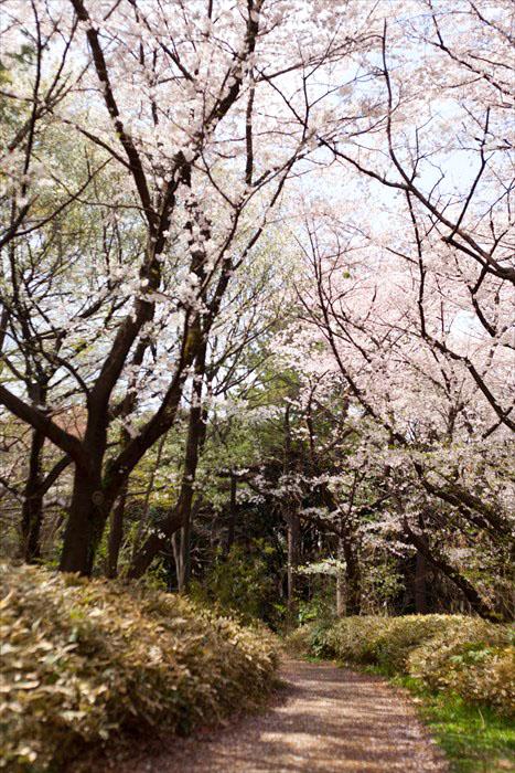 春たけなわ・・・_e0305388_13263573.jpg