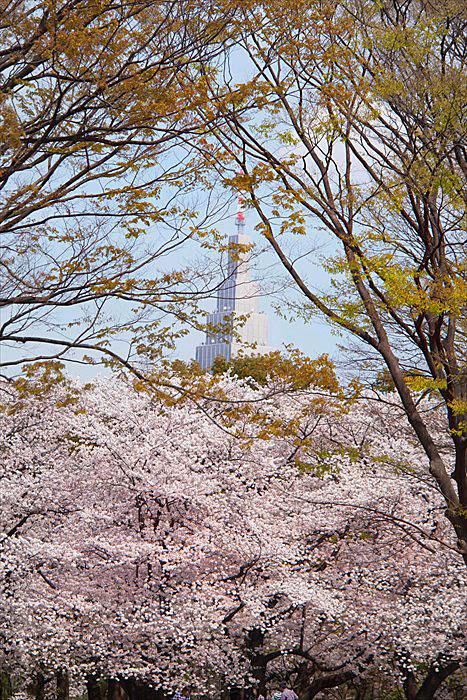 春たけなわ・・・_e0305388_13264668.jpg